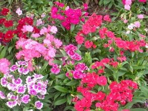 b6a8a-flowers